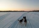 Overnight dogsledding expedition from IceHotel, Jukkasjärvi (Kiruna) Sweden