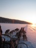 Overnight dogsledding expedition from IceHotel, Jukkasjärvi (Kiruna) Sweden